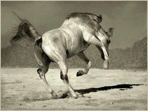 dancing horse